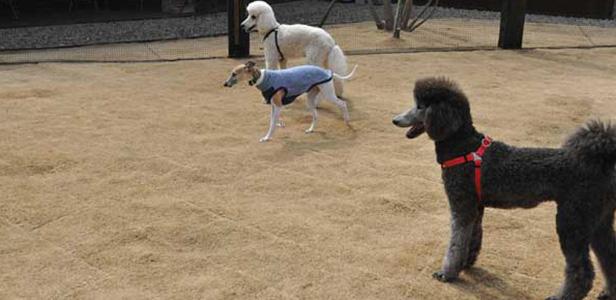 TSUKUBA DOGS<br /> ドッグスつくば店